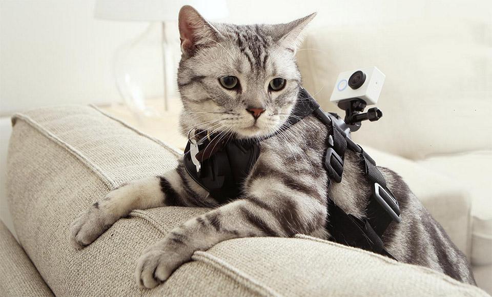 Xiaomi Yi Action Camera и кот